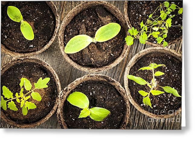 Seedlings growing in peat moss pots Greeting Card by Elena Elisseeva