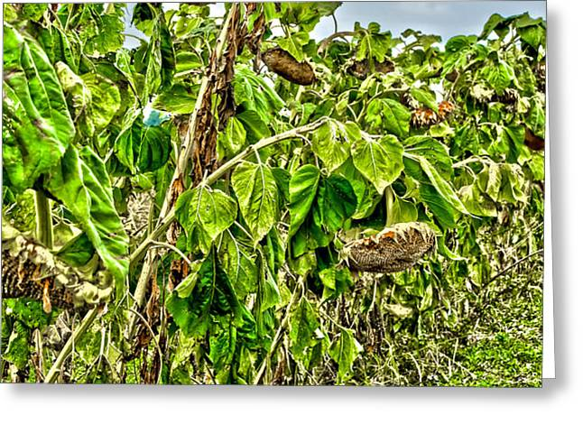 Seeds Greeting Card by Baywest Imaging