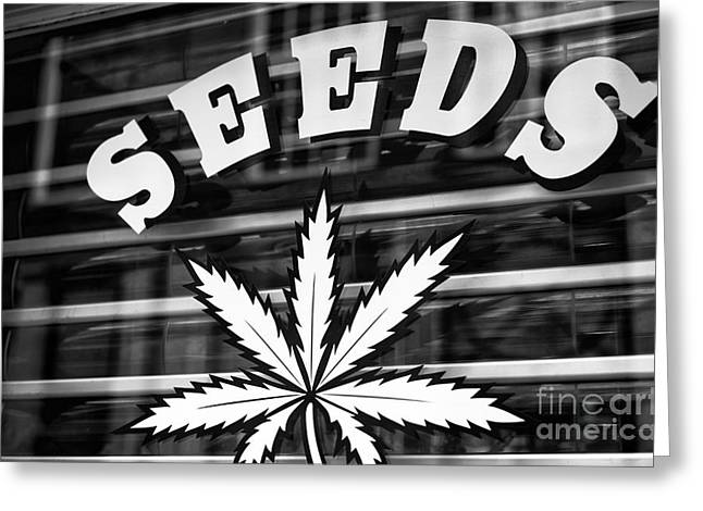 Seed Pot Greeting Cards - Seeds mono Greeting Card by John Rizzuto