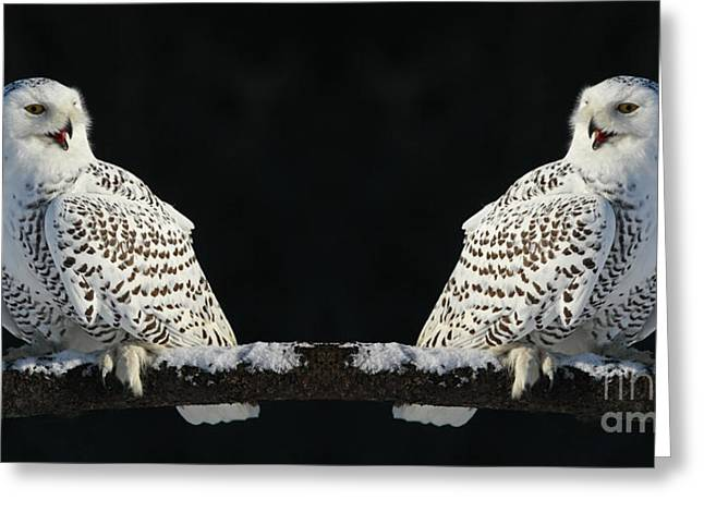 Seeing Double- Snowy Owl at Twilight Greeting Card by Inspired Nature Photography By Shelley Myke