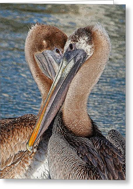 Eye 2 Eye - Heart 2 Heart - Brown Pelican Greeting Card by HH Photography of Florida