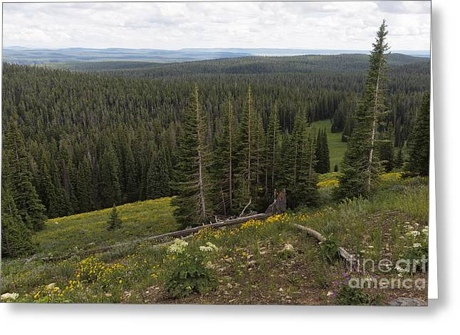 Famous Photographer Greeting Cards - Seeing Forever - Yellowstone Greeting Card by Belinda Greb