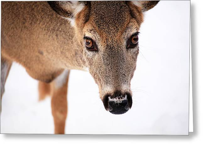 Deer In Snow Greeting Cards - Seeing Into The Eyes Greeting Card by Karol  Livote