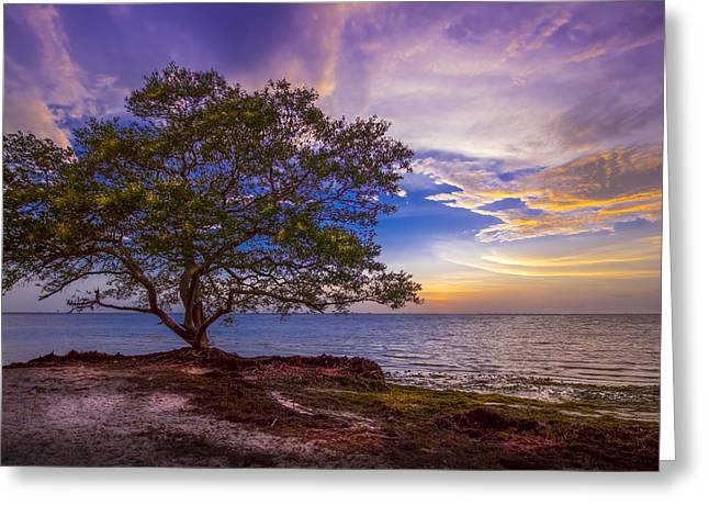 Mangrove Trees Greeting Cards - Seeing is Believing Greeting Card by Marvin Spates