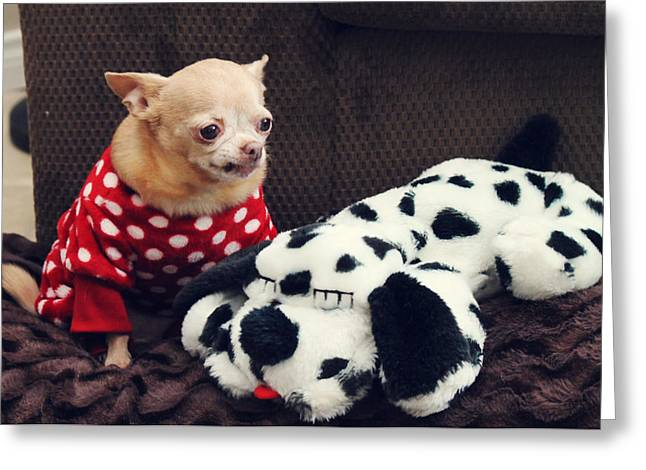 Chihuahua Portraits Greeting Cards - Seeing Spots Greeting Card by Laurie Search
