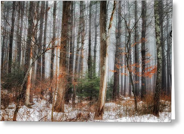 Winter Scenes Rural Scenes Greeting Cards - Seeing the Trees Thru the Forest Greeting Card by Bill  Wakeley