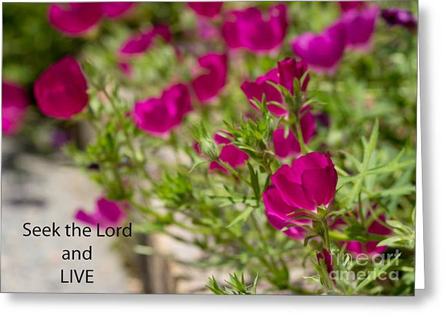 Scripture Reading Greeting Cards - Seek the Lord and Live Greeting Card by Sandra Clark