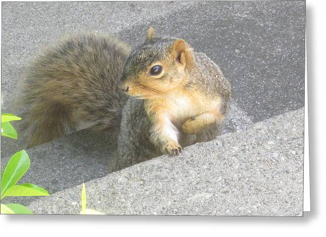 Guy Ricketts Photography Greeting Cards - Seeker Of The Nuts Greeting Card by Guy Ricketts