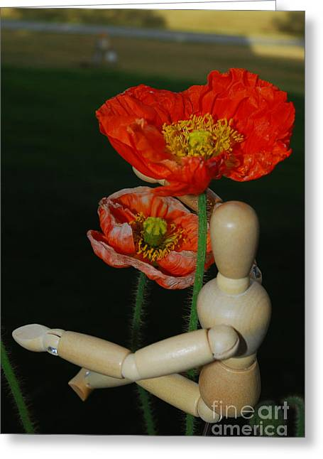 In Trouble Greeting Cards - Seeking a Yellow Brick Road Poppy Number Two Greeting Card by Heather Kirk