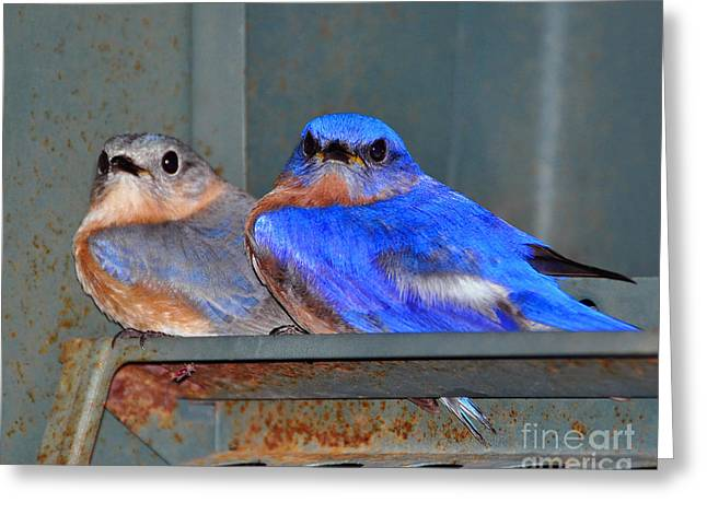 Baby Bird Greeting Cards - Seeking Shelter Greeting Card by Al Powell Photography USA