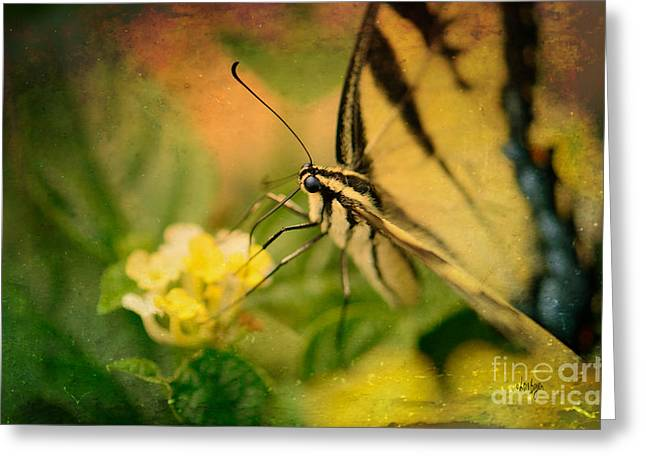 Swallow Tail Greeting Cards - Seeking Sweetness 1 Greeting Card by Lois Bryan