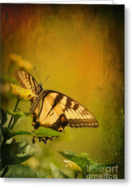 Swallow Tail Greeting Cards - Seeking Sweetness 2 Greeting Card by Lois Bryan