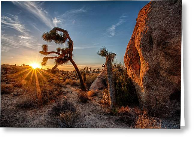 California Images Greeting Cards - Seeking the light Greeting Card by Peter Tellone