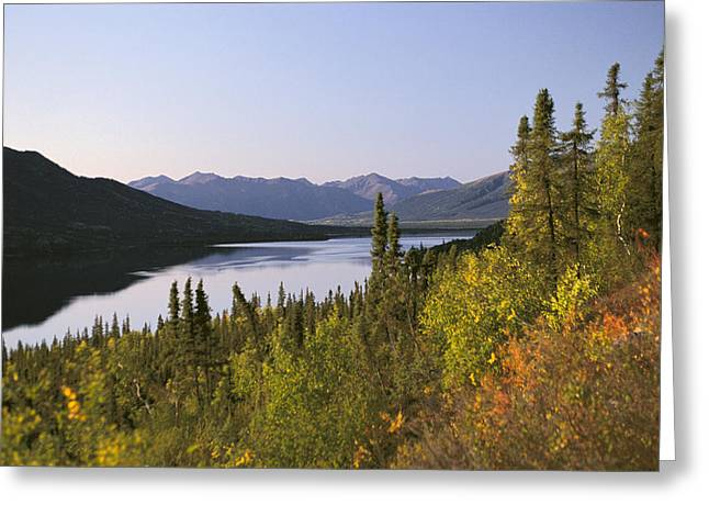 Beautiful Scenery Greeting Cards - Selby Lake Brooks Range Fall Scenic Greeting Card by Chris Arend