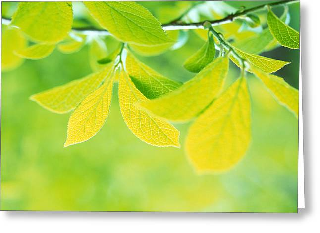 Green Leafs Greeting Cards - Selective Focus Close Up Of Green Greeting Card by Panoramic Images
