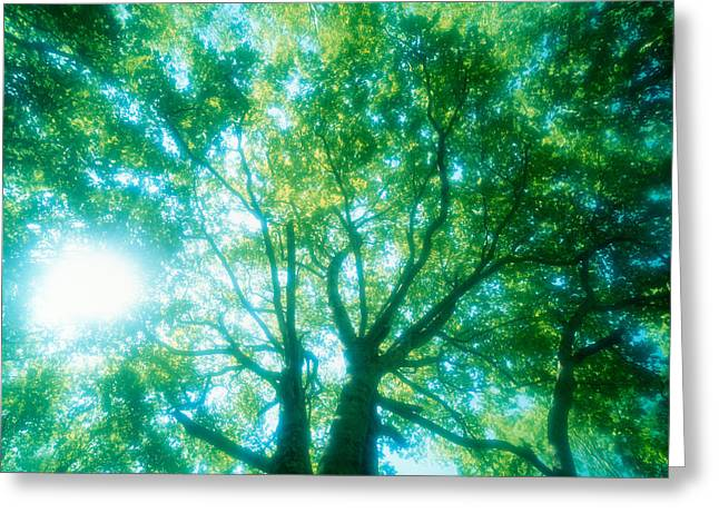 Burst Greeting Cards - Selective Focus Trees In Forest Greeting Card by Panoramic Images