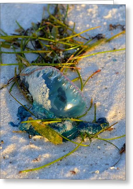 Self Portrait In Man O War On Navarre Beach Greeting Card by Jeff at JSJ Photography
