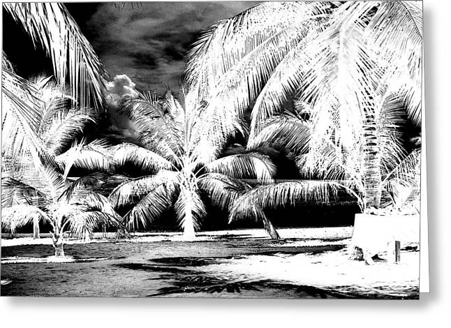 Inverse Greeting Cards - Selling Shells Infrared Extreme Greeting Card by Heather Kirk
