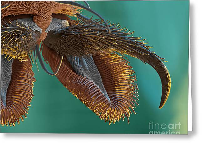 Sem Greeting Cards - Sem Of Stable Fly Foot Greeting Card by Eye of Science