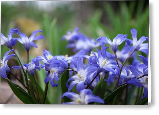 Cubicle Greeting Cards - Send Flowers Fine Art Print Sweet Squill by Penny Hunt Floral Macro Greeting Card by Penny Hunt
