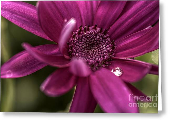Senetti Water Droplet Greeting Card by Andrew Pounder