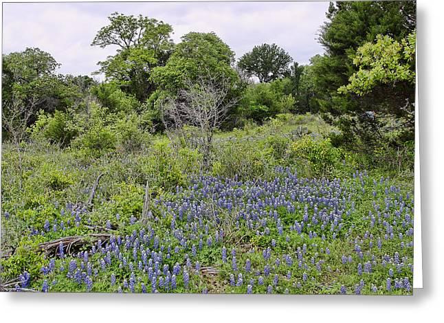 Flower Blossom Greeting Cards - Senic Texas Blue Bonnets Greeting Card by Linda Phelps