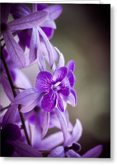 Allium Hollandicum Greeting Cards - Sensational Purple Greeting Card by William Shevchuk