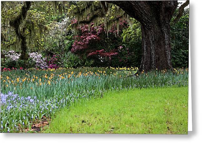 Daffodils Photographs Greeting Cards - Sensational Springtime - Magical Garden III Greeting Card by Suzanne Gaff