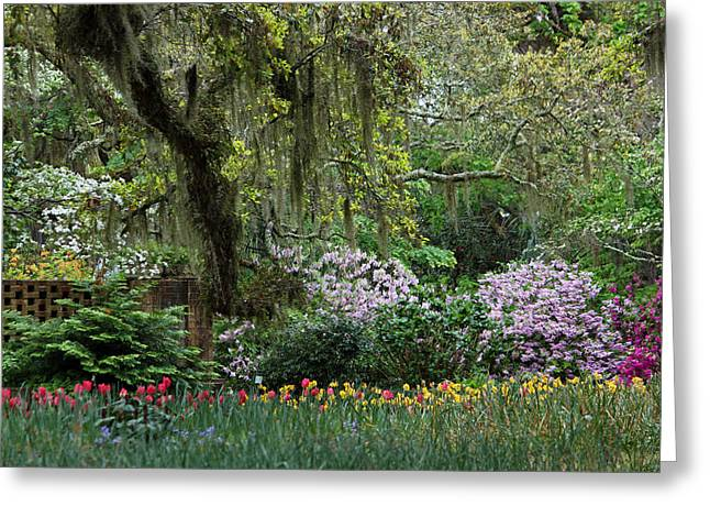 Daffodils Photographs Greeting Cards - Sensational Springtime - Magical Garden IV Greeting Card by Suzanne Gaff
