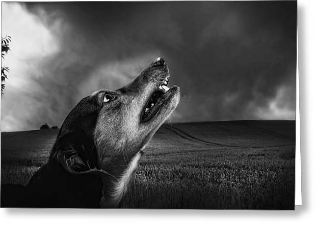 Growling Greeting Cards - Senses on Alert Greeting Card by Mountain Dreams