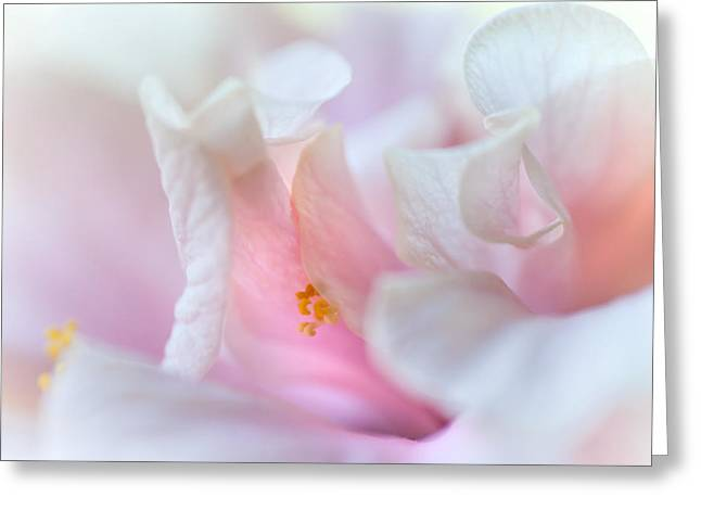 Sensuality. Peach Hibiscus. Macro Greeting Card by Jenny Rainbow