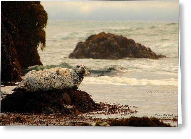Harbor Seals Greeting Cards - Sentinel Of The Sea Greeting Card by Donna Blackhall