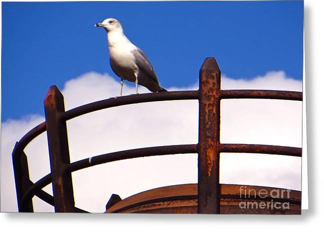 Sea Platform Greeting Cards - Sentinel Sea Gull Greeting Card by Joy Hardee