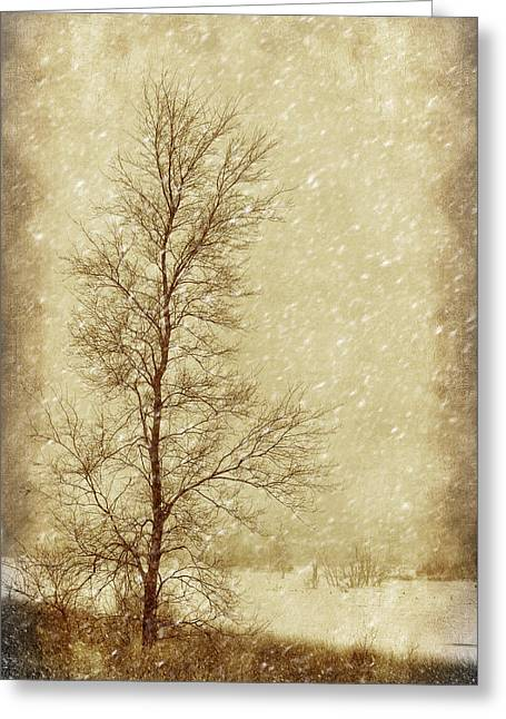 Recreational Park Greeting Cards - Sentinel Tree in Winter Greeting Card by Nikolyn McDonald