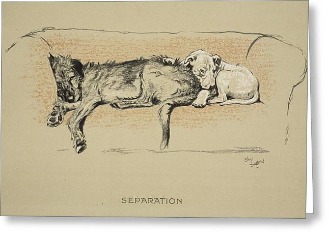 Terrier Dog Drawings Greeting Cards - Separation, 1930, 1st Edition Greeting Card by Cecil Charles Windsor Aldin