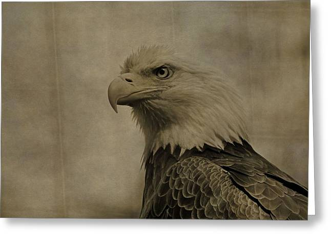 Eagle Greeting Cards - Sepia Bald Eagle Portrait Greeting Card by Dan Sproul