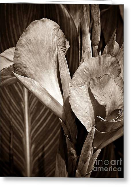 Sepia Canna  Greeting Card by Chalet Roome-Rigdon