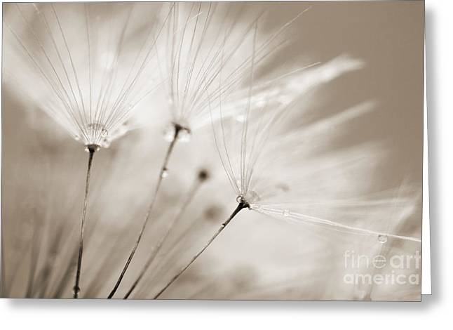 Natalie Kinnear Greeting Cards - Sepia Dandelion Clock and Water Droplets Greeting Card by Natalie Kinnear