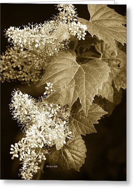 Sepia Flowers Greeting Cards - Sepia Flower Vine Greeting Card by Christina Rollo