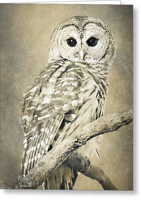 Sepia Owl Greeting Card by Christina Rollo