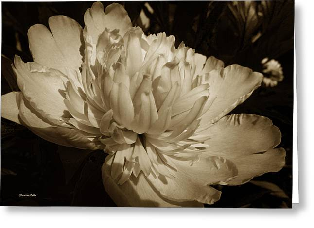 Sepia Flowers Greeting Cards - Sepia Peony Flower Art Greeting Card by Christina Rollo