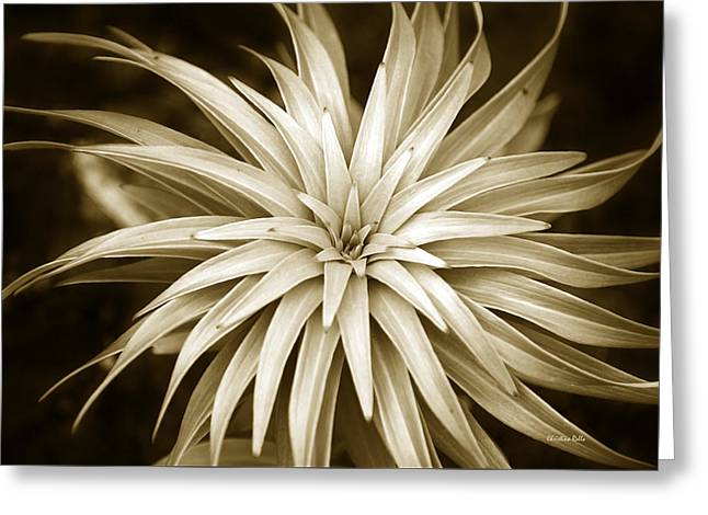 Hypnotic Abstract Greeting Cards - Sepia Plant Spiral Greeting Card by Christina Rollo