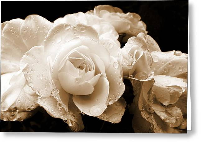 Monochrome Greeting Cards - Sepia Roses with Rain Drops Greeting Card by Jennie Marie Schell