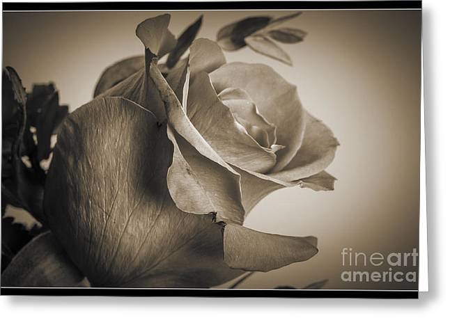 Daisy Framed Prints Greeting Cards - Sepia Tone Rose 8040.01 Greeting Card by M K  Miller