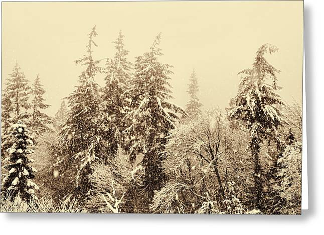 Evergreen With Snow Greeting Cards - Sepia Winter Landscape Greeting Card by Peggy Collins