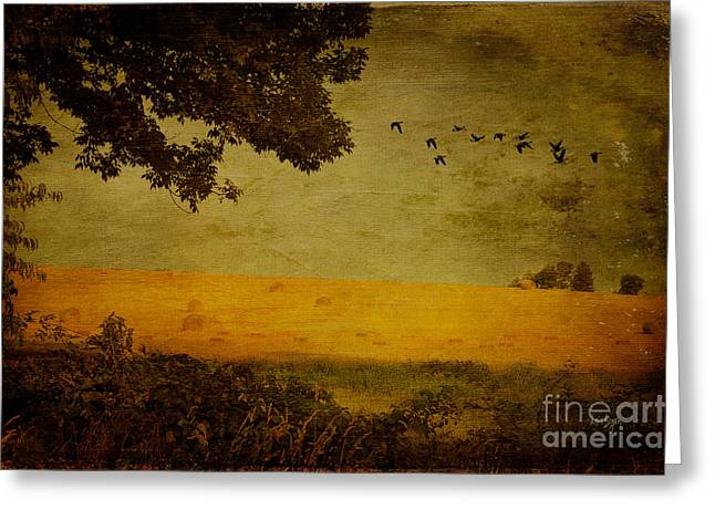 Hay Bales Greeting Cards - September Greeting Card by Lois Bryan