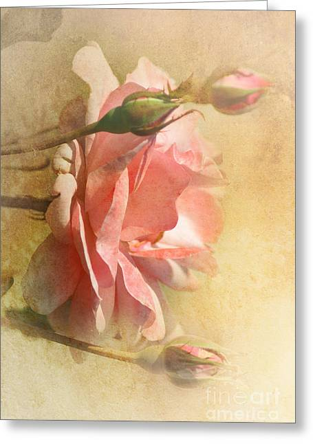 September Rose Greeting Card by Elaine Manley