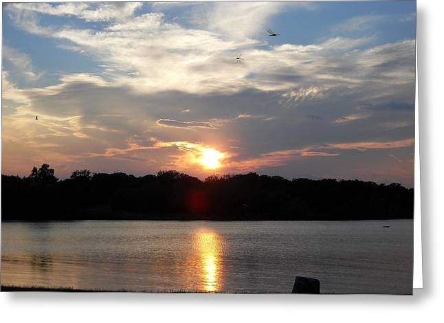 Tress Greeting Cards Greeting Cards - September Sunset Greeting Card by Donna Wilson