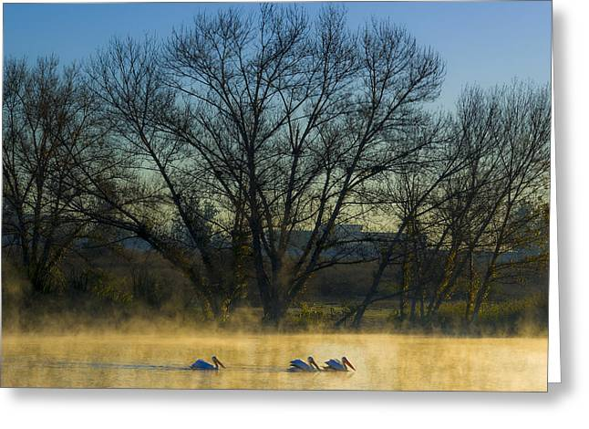 Sepulveda Dam At Dawn On New Year's Day 2015 Greeting Card by Joe Doherty