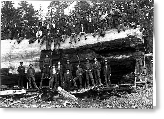 Loggers Greeting Cards - SEQUOIA LOG MEMORIALIZED c. 1890 Greeting Card by Daniel Hagerman